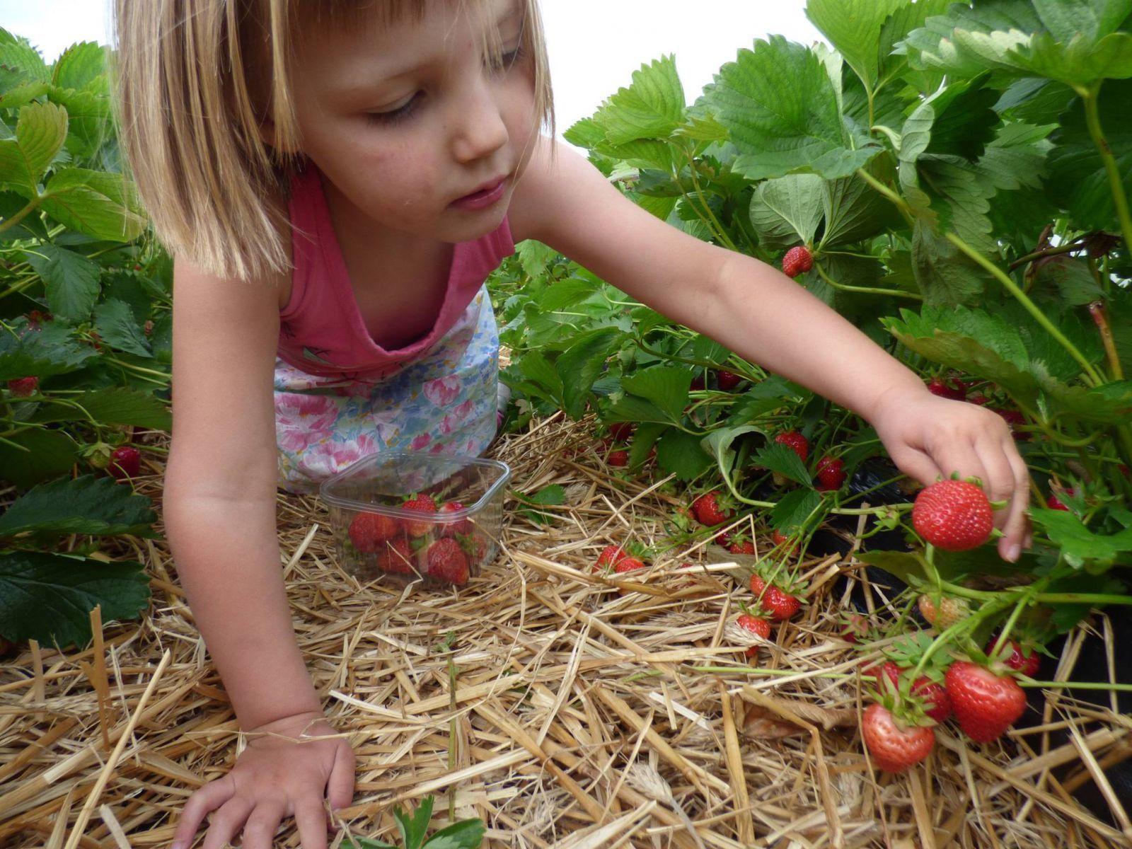 Bioboerderij 't Ambrozijn bio mijn natuur zelfpluk