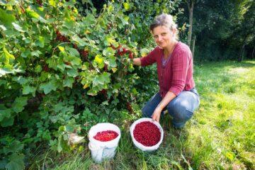 20180608 Bmn Fruittelers