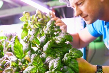 Bmn Colruyt Vertical Farm