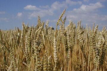 Biograan