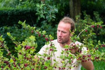 KVL/Creative Nature bij bioboerderij Lombarts Calville rode bes bio mijn natuur biologisch fruitsap boer fruitpers