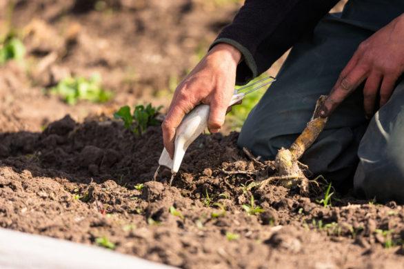 2019 10 24 Soil Association Waarschuwt Britse Studie