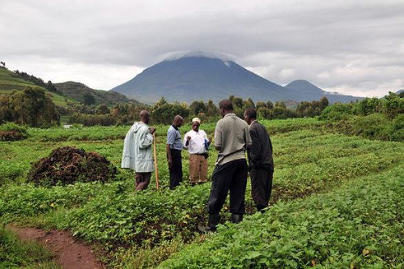 Organic Agriculture Uganda
