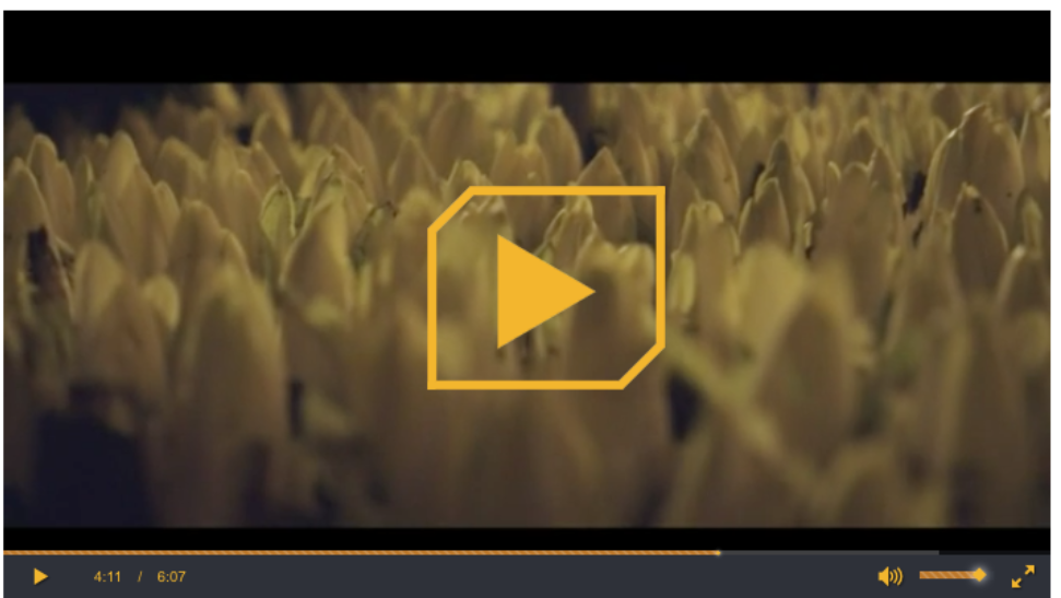 Schermafbeelding-2018-11-21-om-13.06.56.png#asset:108758:centeredColumnHeaderImage