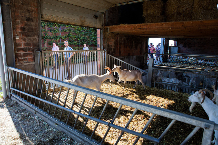 Lisa Develtere bij bioboerderij De Volle Maan bio mijn natuur geiten melk kaas yoghurt