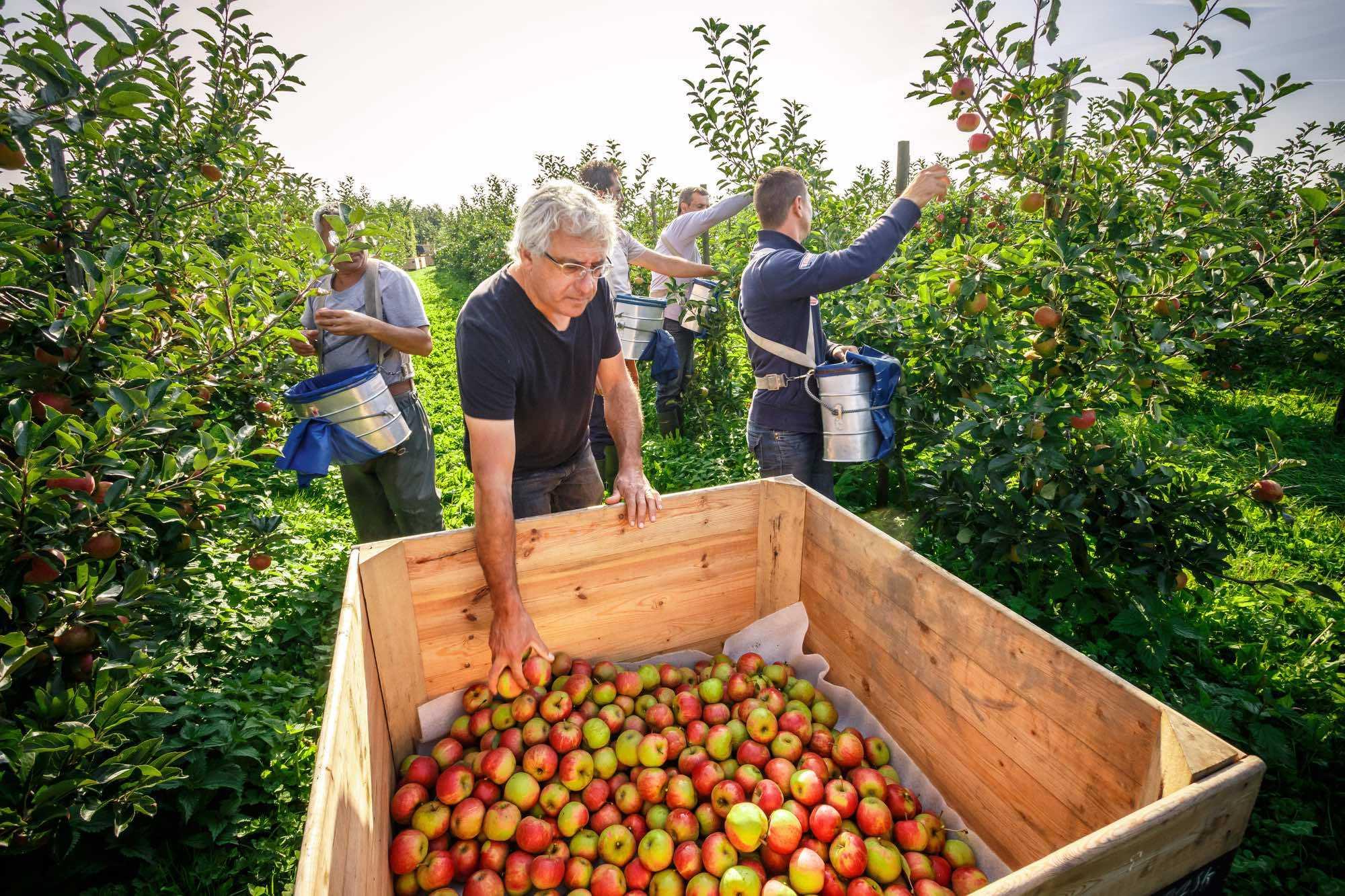 Fruitbedrijf Van Eykeren