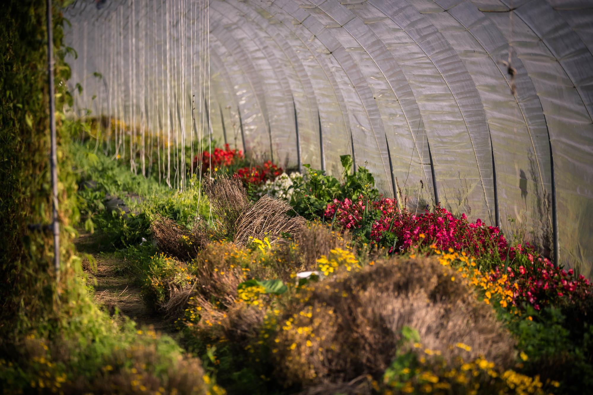 KVL Creative Nature bij bioboerderij Le monde des mille couleurs bio mijn natuur